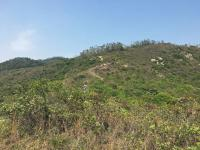Trail descending towards Mui Wo