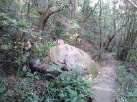 Concrete turtle on Wilson trail